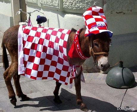 burro croata